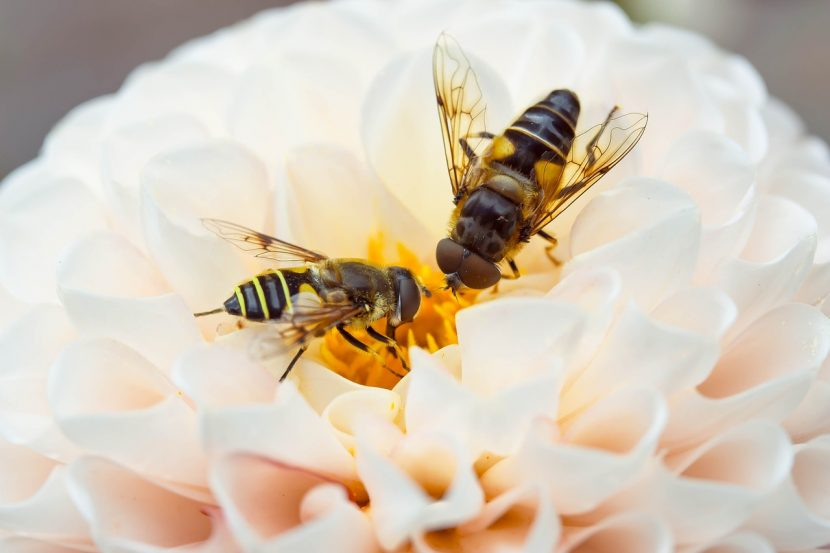 3D printing with beeswax